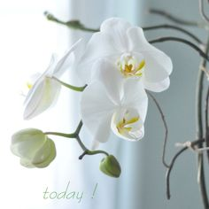 orchid today--growing tips for indoor orchids.  Just got a beautiful one and want to be sure it stays alive!