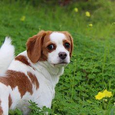 perros de raza mestiza encantadores