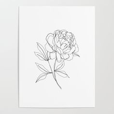 Botanical Illustration Line Drawing - Peony Art Poster by The Colour Study - X Peonies Wallpaper, Peonies And Hydrangeas, Peonies Garden, Peonies Bouquet, White Peonies, Purple Peonies, Peony Drawing, Drawing Step, Leaf Drawing