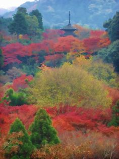 autumn by quenalbertini - Awesome foliage in Kyoto, Japan, by alexbrn - via flickr...