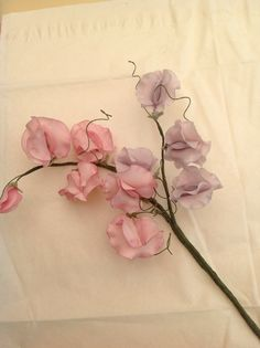 Simple sweet pea flowers