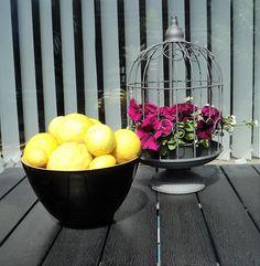 Citronerne har jeg selv plukket på en privat have på Mallorca. Det er tre forskellige sorter, og jeg har lavet citronspecier, citronis, citronsukker og tørret citronskal. Tak til Linnie for en dejlig ferie :)