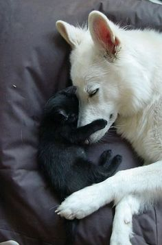 This reminds me of my first cat, Mr. Poots, and his best friend the dog from across the street, Cushion.