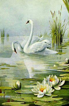 GRACEFUL SWAN ART
