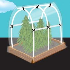 Daunted by growing your own cannabis? Check out our tutorial on how to build a simple greenhouse, making outdoor growing easier than ever. Simple Greenhouse, Best Greenhouse, Portable Greenhouse, Indoor Greenhouse, Greenhouse Growing, Greenhouse Wedding, Greenhouse Plans, Pallet Greenhouse, Marijuana Plants