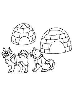 husky en iglo