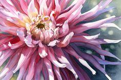 "Marney Ward ""Pink Dahlia"" (Watercolour; Image Size 14x21"")"