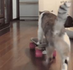 Share this Cat goes on a skateboard Animated GIF with everyone. Gif4Share is best source of Funny GIFs, Cats GIFs, Reactions GIFs to Share on social networks and chat.
