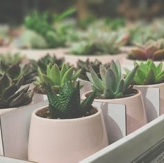 Loved these succulents in Ikea! #succulents #plants #pink #ikea #sandiego