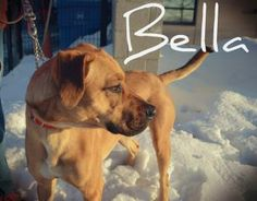 Bella needs a home!  She is a 1yr old Shepherd mix available at the Hamilton Burlington SPCA  www.hbspca.com