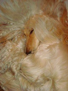 True sleeping beauty