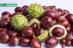 Nepřehlédněte: Kaštany. Poznejte jejich sílu, kouzlo i moc! Coconut, Fruit, Vegetables, Health, Gardening, Food, Fitness, Health Care, Lawn And Garden