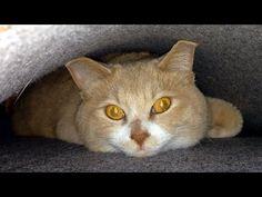 『僕、もぐら猫やねん』穴蔵が大好きな♂猫だいず;猫おもしろ動画