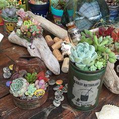 みどりさんにもらった缶に☺︎☺︎☺︎ #多肉#寄せ植え#寄せ植え_chiho #succulents#ガーデニング