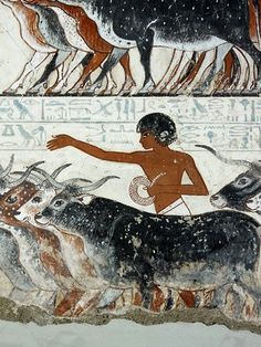 Typical man of ancient Egypt herding cattle
