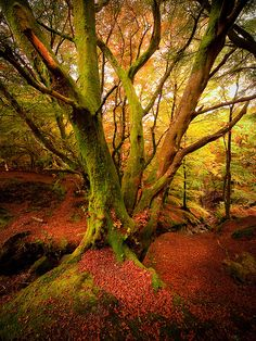Autumn Forest, Scotland photo via pixie by Mibralegare What A Wonderful World, Beautiful World, Beautiful Places, Beautiful Pictures, Autumn Forest, Amazing Nature, Nature Photos, Land Scape, Mother Nature