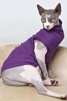 Sphynx cat Zizzles challenges Victoria Beckham in this natty garment
