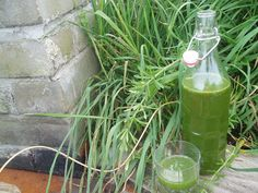 Cleavers (Galium aparine) is best known as that weed you can stick onto your clothes – but it has a history of herbal use as a purifying ton...
