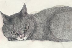 Midori Yamada. I used to draw cats all the time growing up. They were my still-lifes.