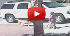 AMAZING: Cat Saves Boy From Vicious Dog Attack
