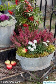 plantering,zinkhink,emalj,gran,ljung,äpplen
