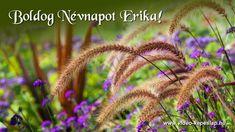 Nature, Plants, Naturaleza, Plant, Nature Illustration, Off Grid, Planets, Natural