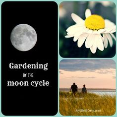 Gardening by the moon cycle