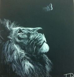 Lion drawing in white pastel on black By Taelor Daffer