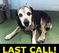 Ned, 6 yo beagle mix. Very gentle, sweet boy. Lay quietly curled up, has a sad…