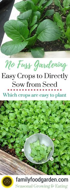 Easy Vegetables to Directly Sow into your Garden