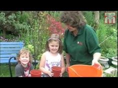 How To Grow Sunflowers video with Thompson & Morgan.