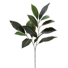 Ashland® Floral Essentials Magnolia Leaf Spray - 13 leaves for 2.50