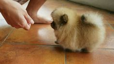 Walking fur ball...