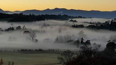 Upper Moutere. Early morning in fog Shroud.