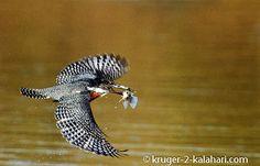 Photographing birds in flight...