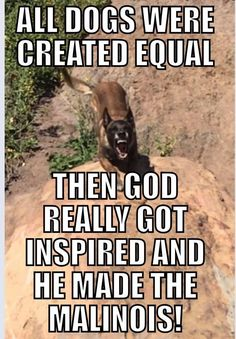 Sounds Right. Funny Animal Memes, Funny Dogs, Funny Animals, Military Working Dogs, Military Dogs, Big Dogs, Dogs And Puppies, Belgian Malinois Puppies, Belgium Malinois