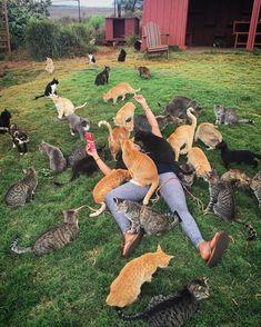 Découvrez le paradis des chats ! À Hawaï, des centaines de chats libres en plein air n'attendent que des câlins