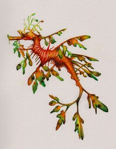 http://www.cindylane.com.au/wp-content/gallery/illustrations/leafy-sea-dragon.jpg