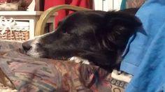 Scintille di fantasia:   Se mai arriverà nella mia vita un altro cane dev...