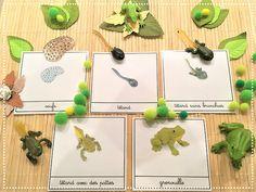 DIY Atelier Montessori : Cycle de la Vie de la Grenouille (PDF) | www.cespetiteschosesdelavie.com, sorties & blog DIY pour enfants