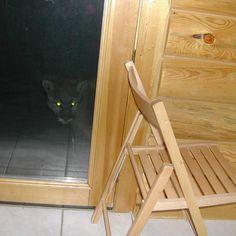 http://urbanlegends.about.com/od/animalkingdom/ig/Crazy-Critters/Cougar-on-the-Porch.htm