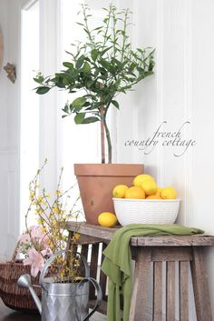 FRENCH COUNTRY COTTAGE: Spring Greenery Indoors