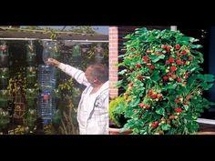 Como cultivar fresas en botella de plástico en forma de pirámide - YouTube
