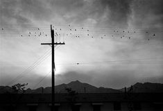 'Birds on wire, Evening, Manzanar Relocation Center', 1943 photograph by Ansel Adams. Photo was taken during Adam's government assignment to photograph Japanese American's daily life in the Manzanar Internment Camp during World War II. Ansel Adams Photography, Classic Photography, Vintage Photography, Black And White Photography, Fishing Photography, People Photography, Photography Ideas, Minimalist Photography, Urban Photography