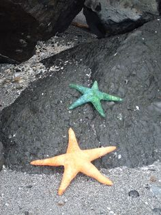 My sea stars visiting Golden Gardens