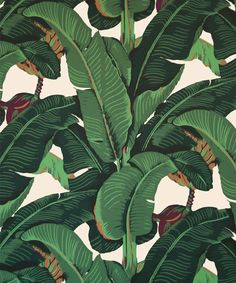 Martinique, the iconic giant banana leaf wallpaper used on the walls of the Beverly Hills Hotel and New York's Indochine Tree Wallpaper, Bathroom Wallpaper, Fabric Wallpaper, Pattern Wallpaper, Wallpaper Decor, Mobile Wallpaper, Classic Wallpaper, Tropical Wallpaper, Beverly Hills Hotel