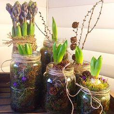 Nydelig! Glass Vase, Instagram Posts, Plants, Christmas, Decor, Xmas, Decoration, Navidad, Plant