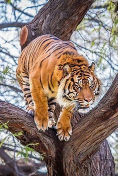 Oh, the tiger will love you. There is no sincerer love than the love of food. George Bernard Shaw
