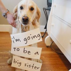 For people whos dogs are also their kids, cute baby announcement.