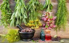 Tα top 10 βότανα του κόσμου!!Διαβάστε τις θεραπευτικές τους ιδιότητες..